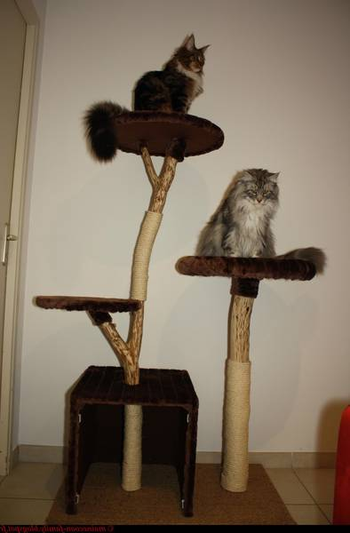 arbre a chat zooplus