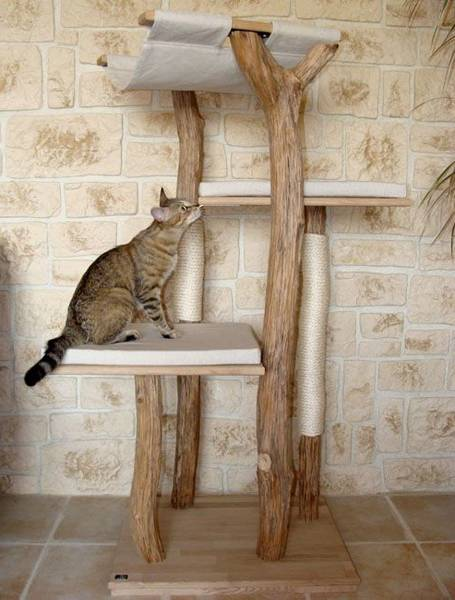 arbre a chat adulte