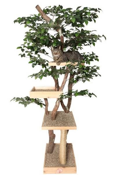 Arbre a chat plafond - guide